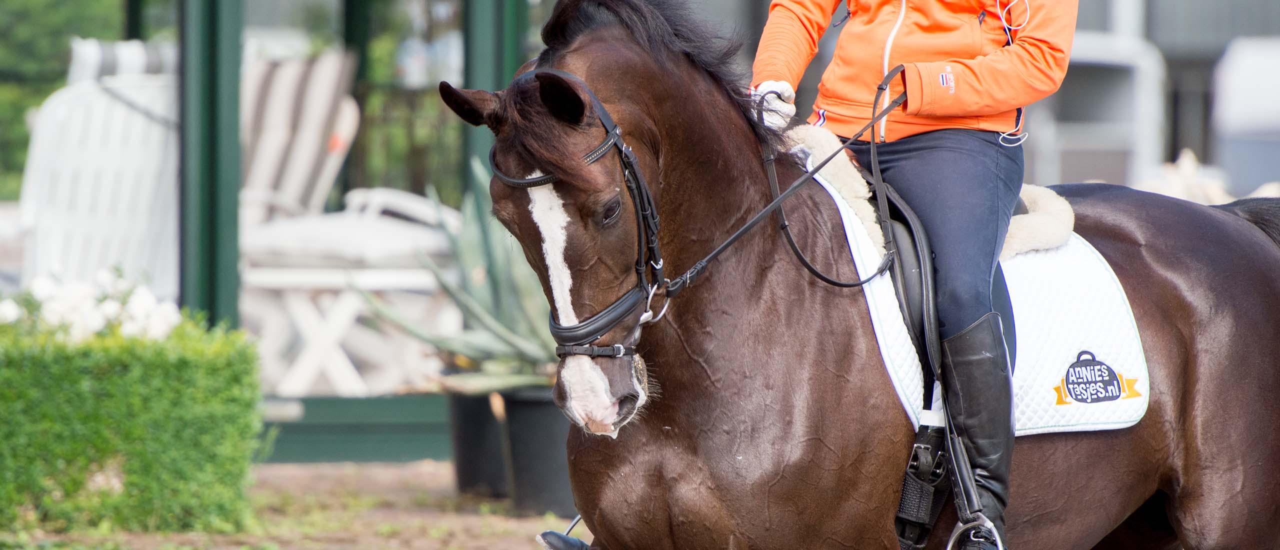 paardenfotografie Gelderland