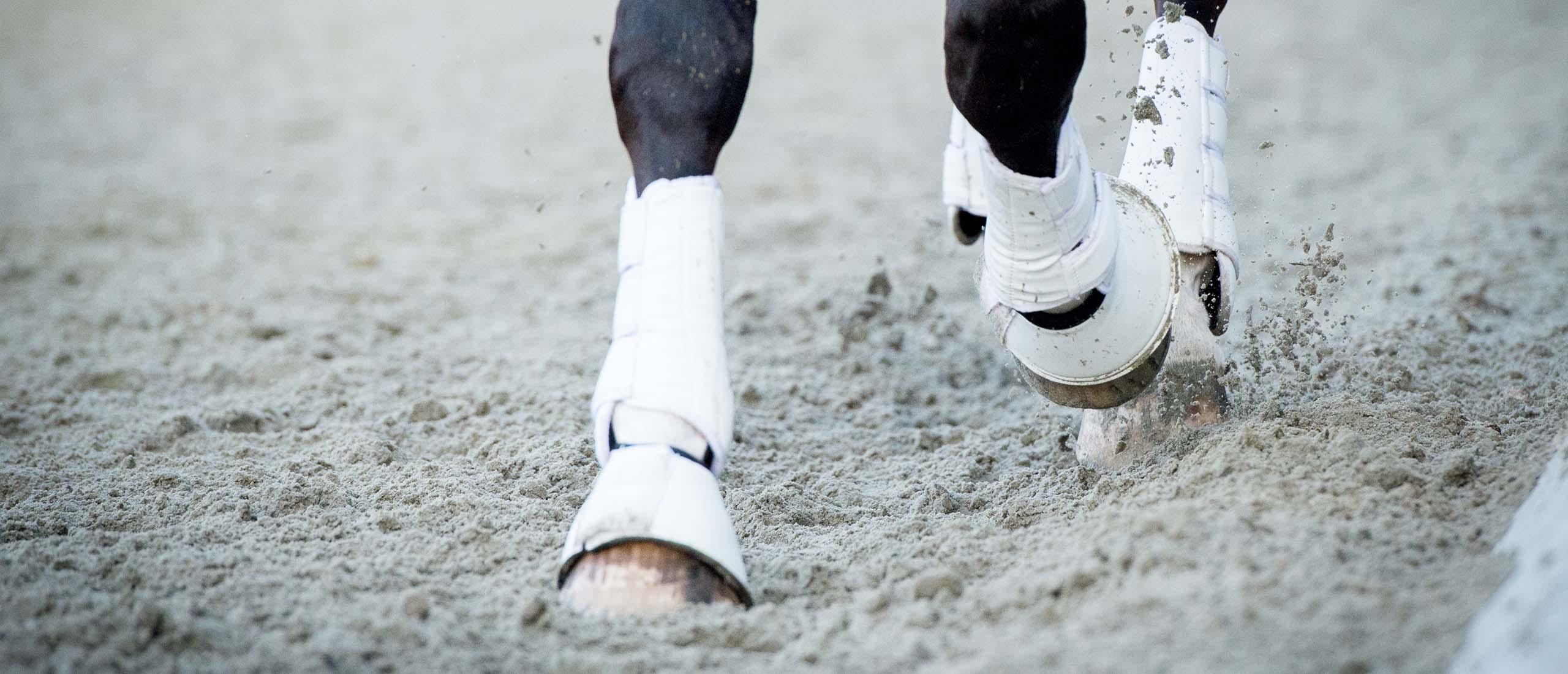 Paardenfotografie Den Bosch - Details